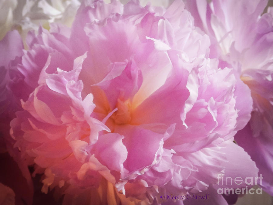 Pink Flowers No. 77 by Monica C Stovall