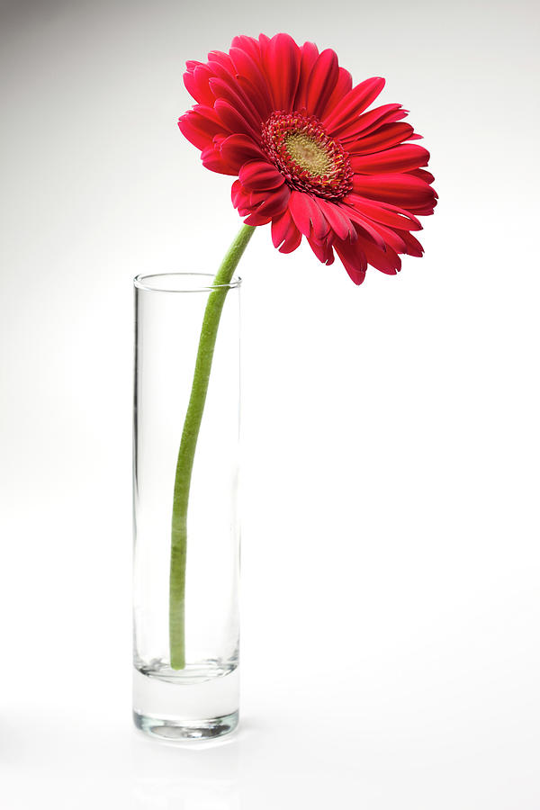 Pink Gerbera Daisy In A Glass Vase Photograph by Jill Fromer