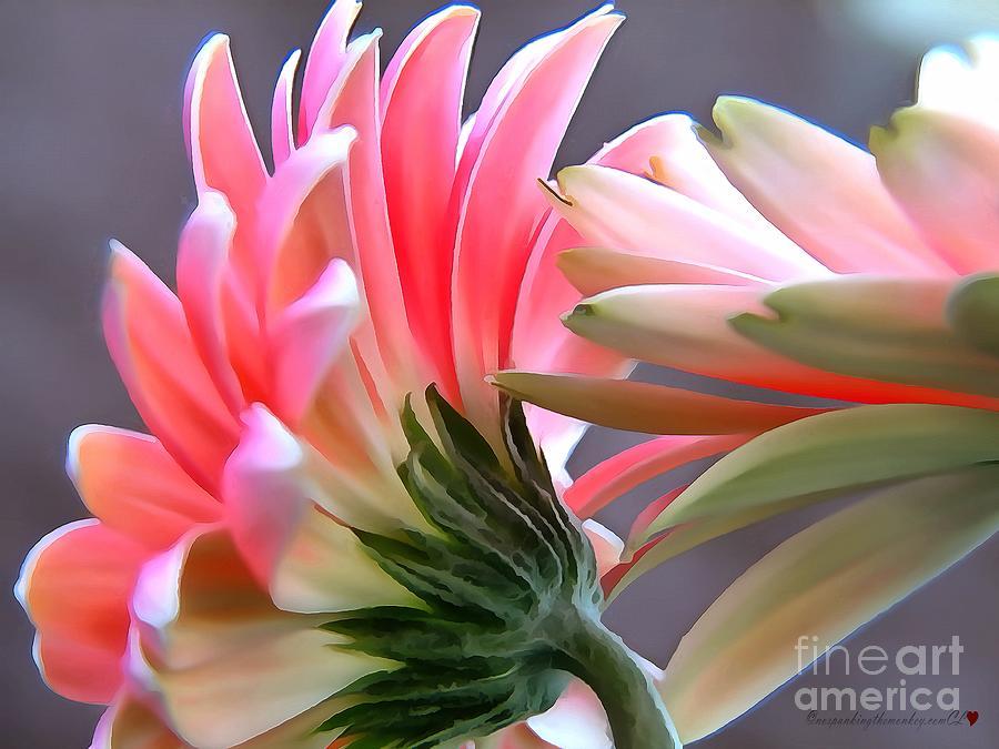 Pink Gerbera Daisy In Acrylic by Catherine Lott