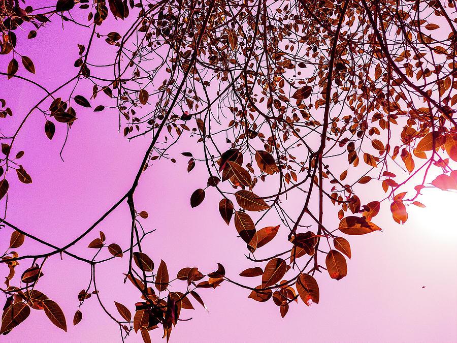 Pink Glow Photograph