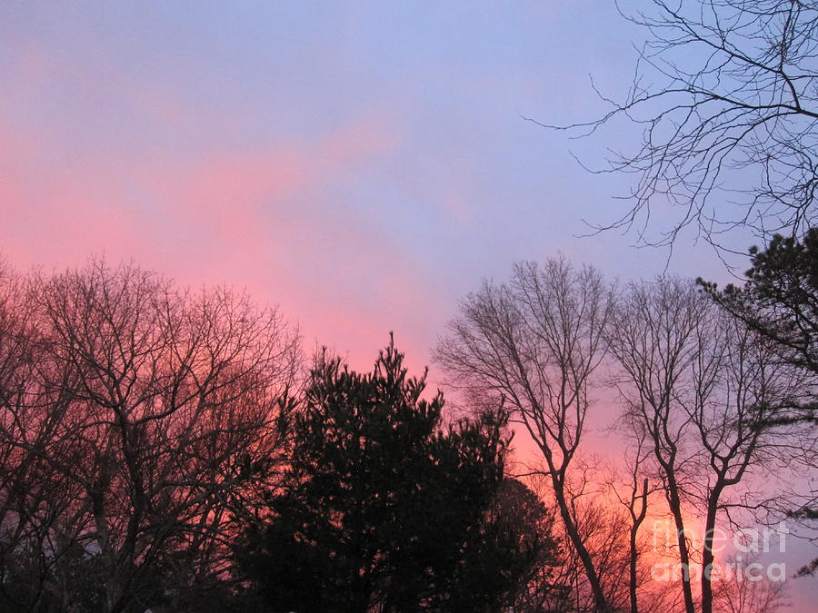 Trees Photograph - Pink Glowing Evening Sky 4 by Deborah A Andreas