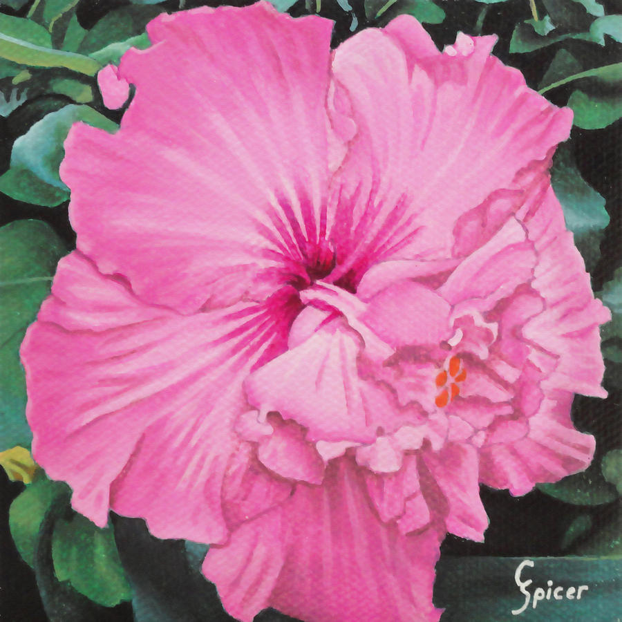 Pink Painting - Pink Hibiscus by Christopher Spicer