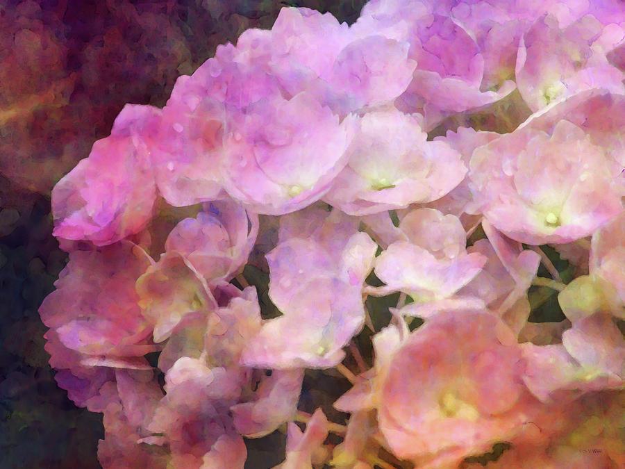 Pink Hydrangea 7023 IDP_2 by Steven Ward