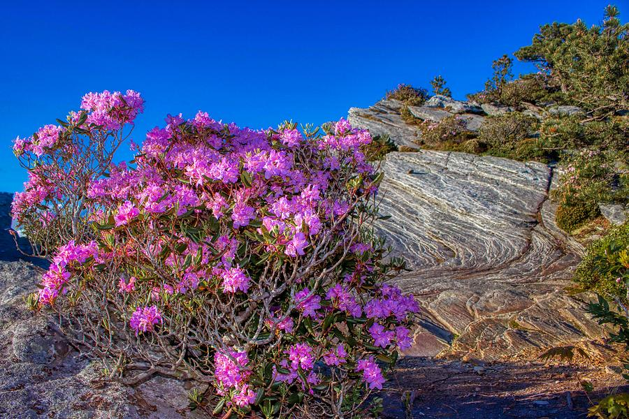 Pink in the Wilderness by Dana Foreman