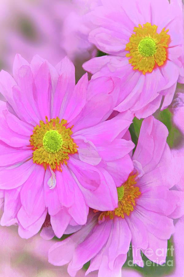 Pink Japanese Anemone Art Photograph
