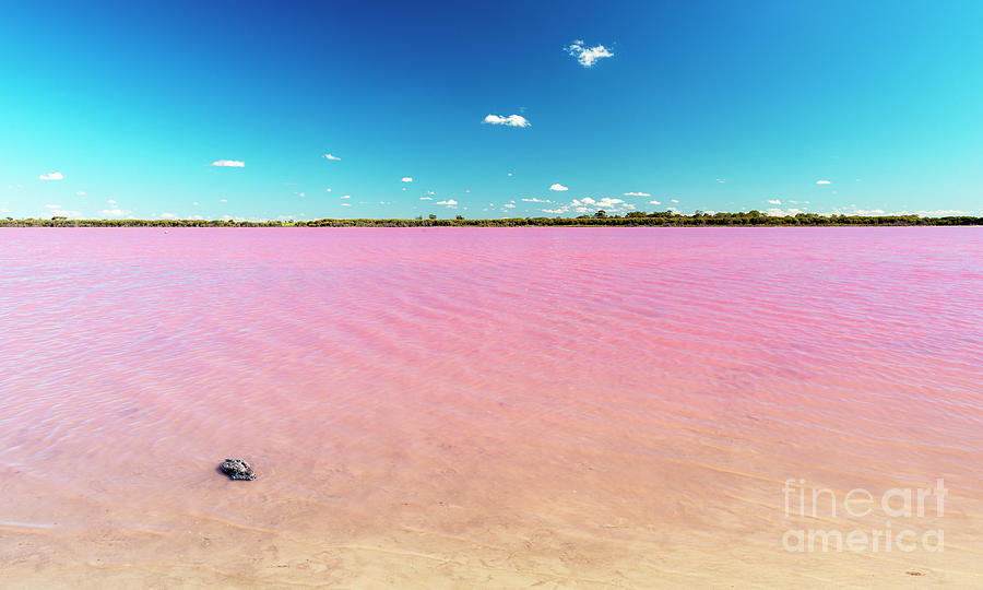 Pink Lake Australia by Tim Hester