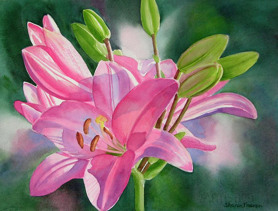 Watercolor Lily Painting - Pink Lily with Buds by Sharon Freeman