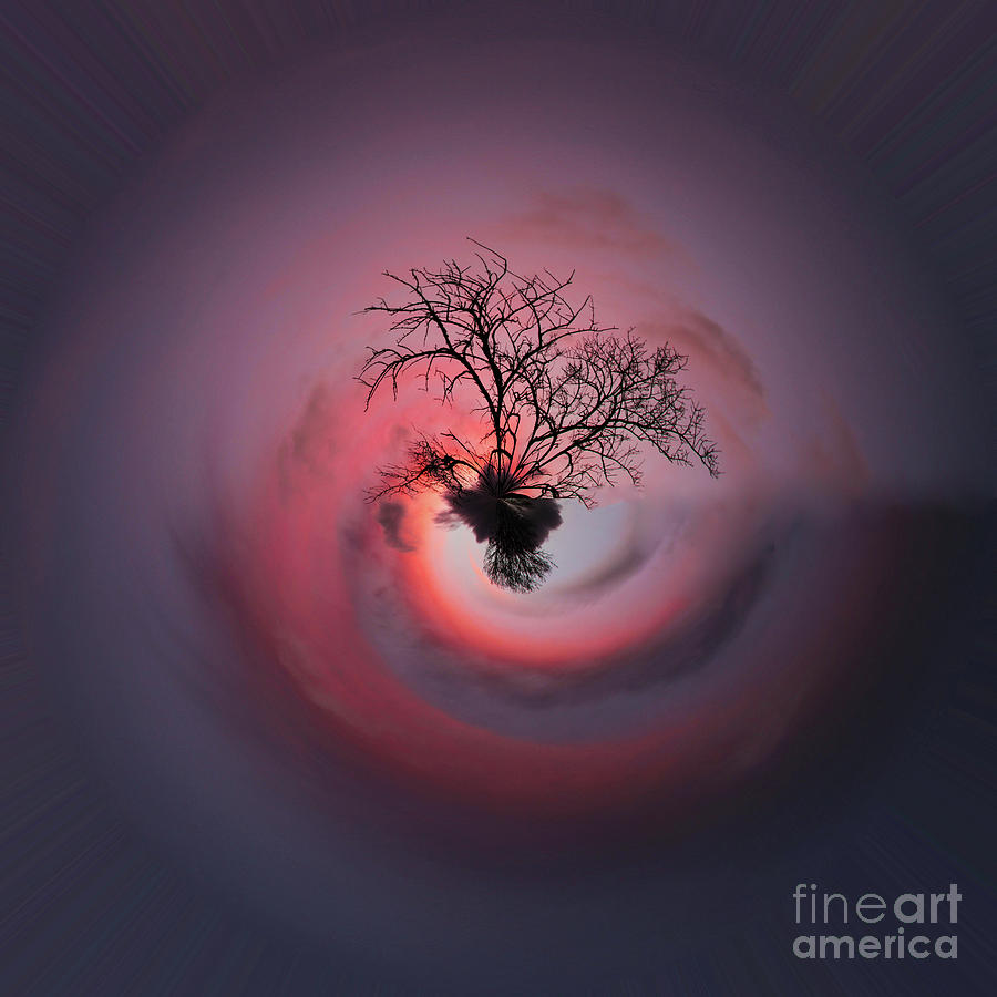 Pink Little Planet Photograph