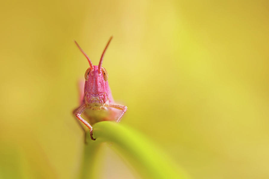 Pink Animal Photograph - Pink Nymph by Roeselien Raimond