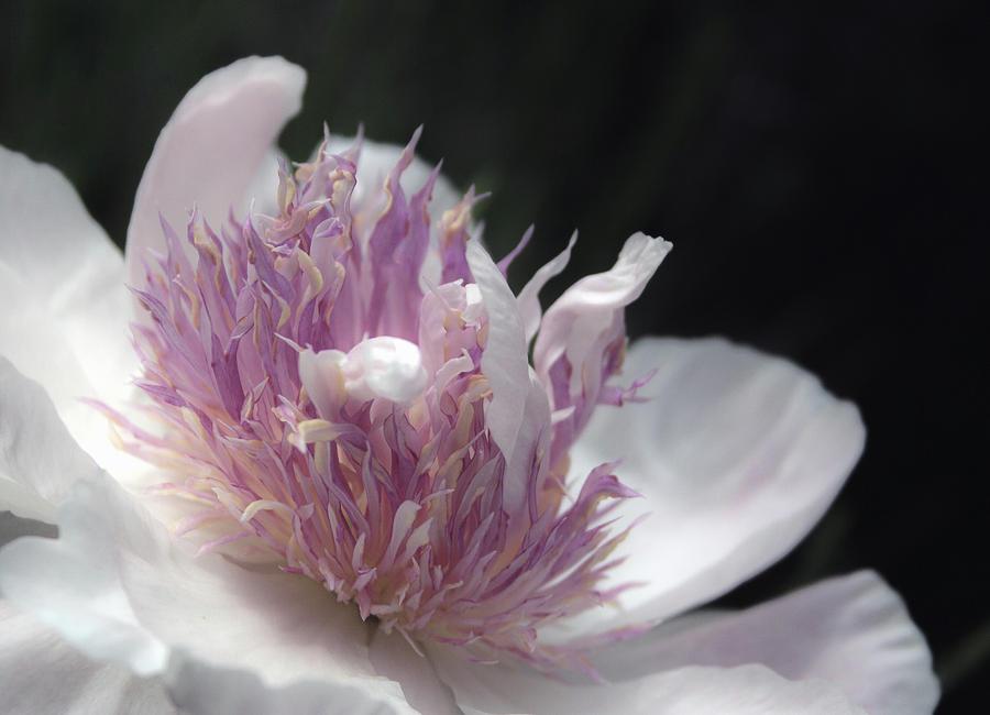 Pink Pastel Petals by Traci Asaurus