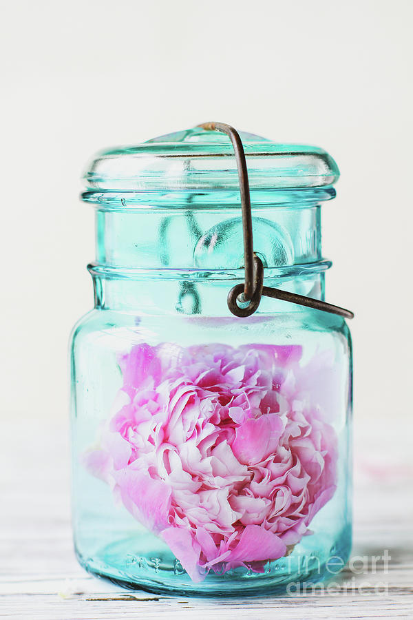 Pink Peony Flower inside an Antique Canning Bail Jar by Stephanie Frey