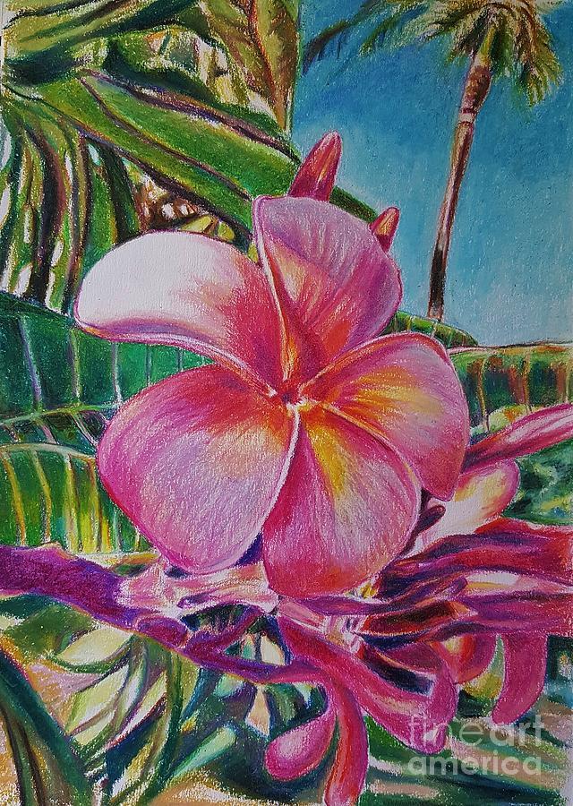 cc81683fb8854 Pink Plumeria Drawing by Manju Chau