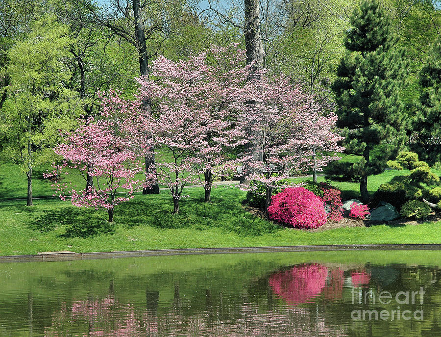 Pink Reflections by Steve Edwards