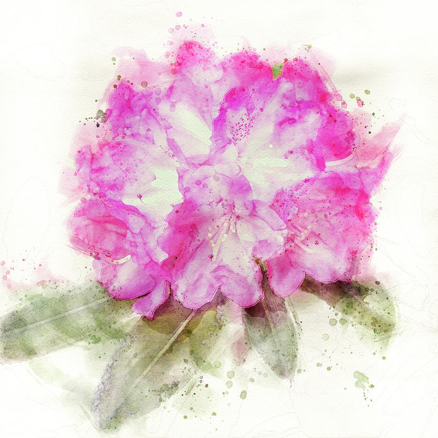 Pink Rhododendron flower  by Edita Edith Anna Brus