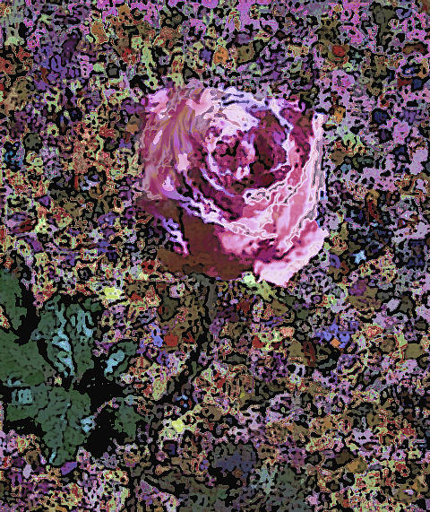 Pink Rose 1050 by Corinne Carroll