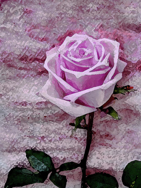 Pink Rose by Corinne Carroll
