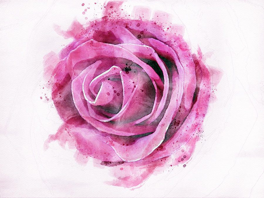 Pink rose Digital art  by Edita Edith Anna Brus