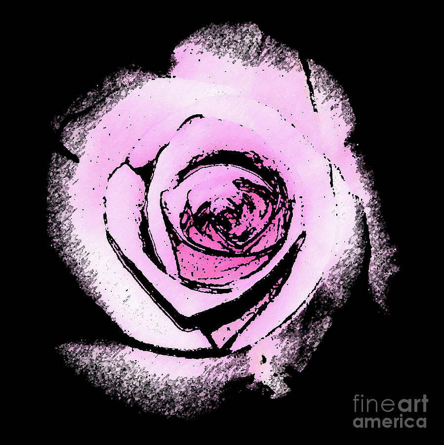 Pink Rose on Black by Corinne Carroll