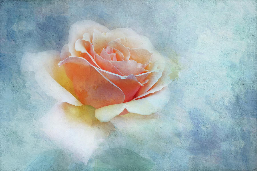 Pink rose on Blue Texture by Terry Davis