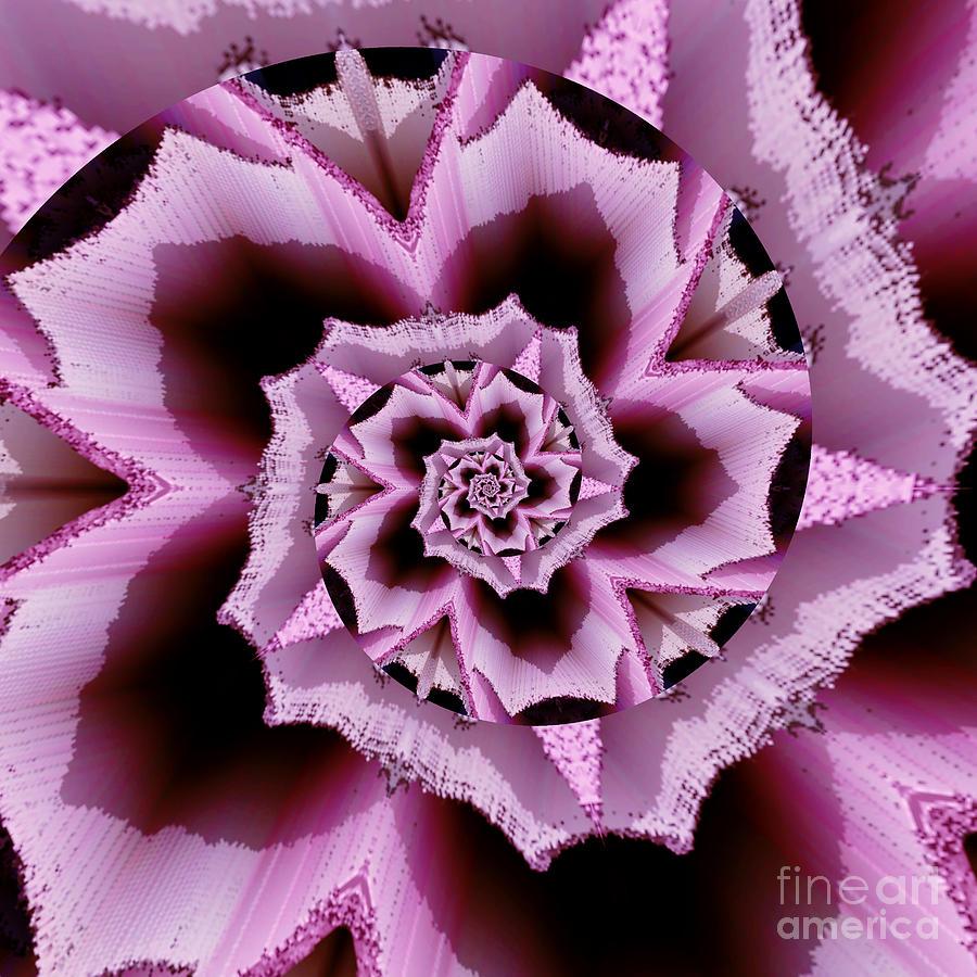 Pink Rose Spiral by Rachel Hannah