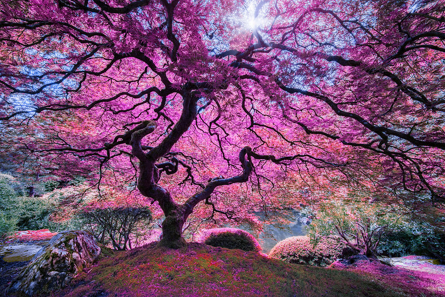 North America Photograph - Pink Tree 2 by Moises Levy