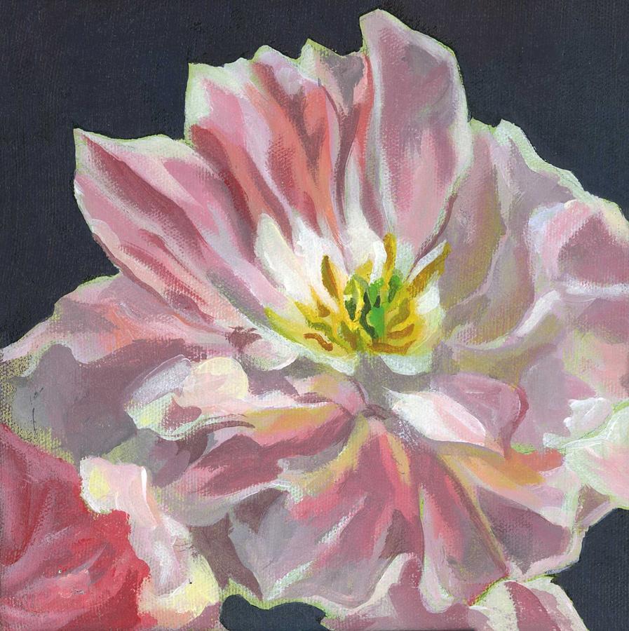 pink tulip by Alfred Ng