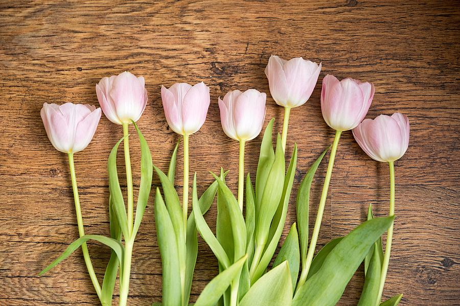 Pink Tulips by Top Wallpapers