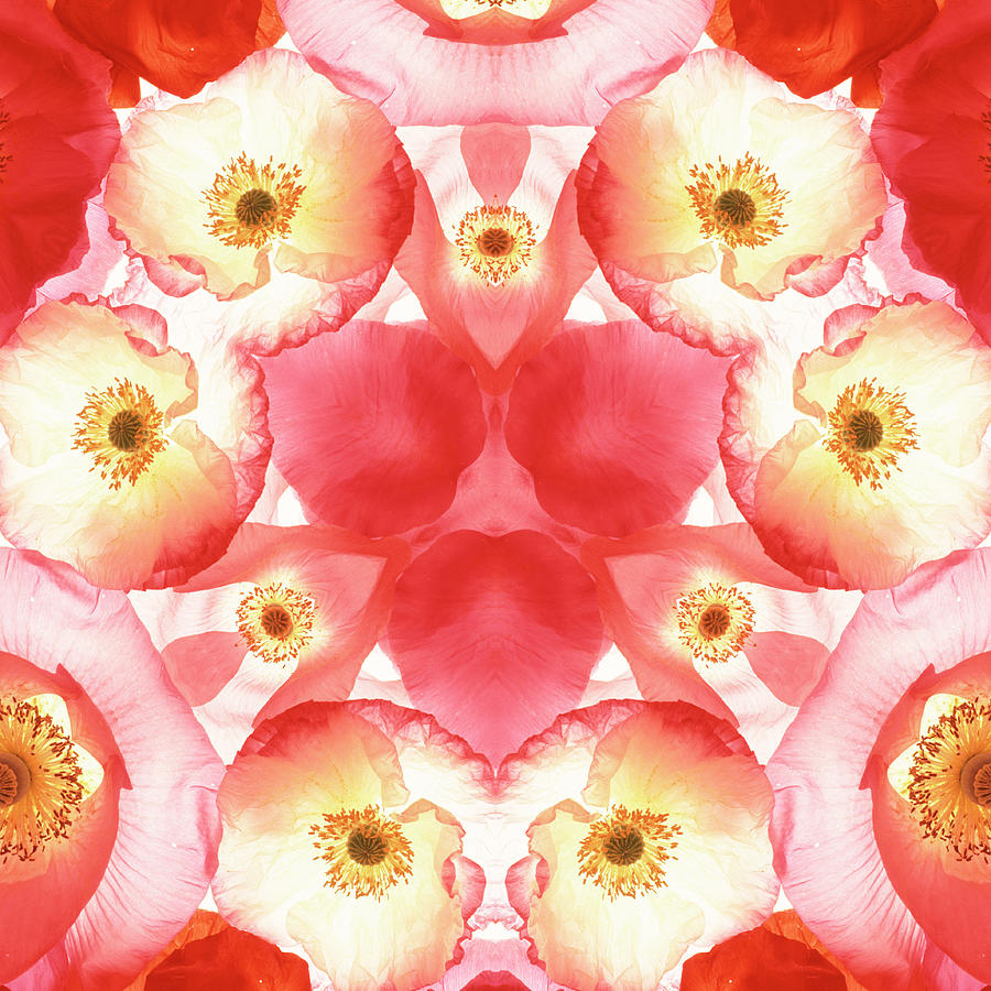 Pink Valentine Mandala Photograph by Steve Satushek