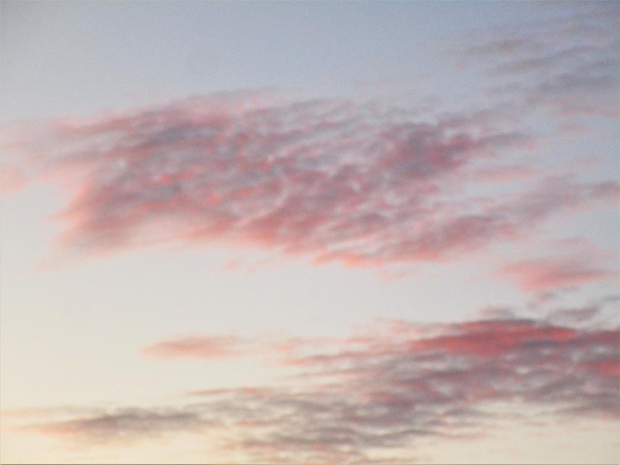 Pinkish  by Rosita Larsson