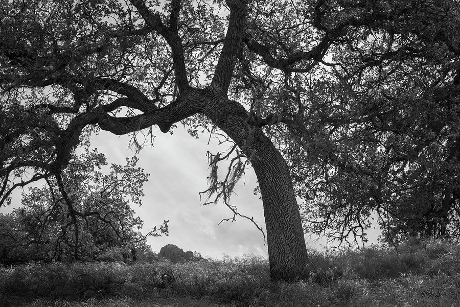 Pinnacles NP I BW by David Gordon