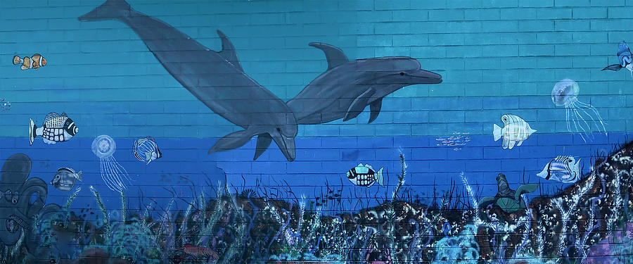 Pismo Beach Dolphin Mural by TL Wilson Photography by Teresa Wilson