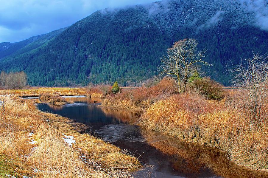Pitt Polder Creek by Sharon Talson