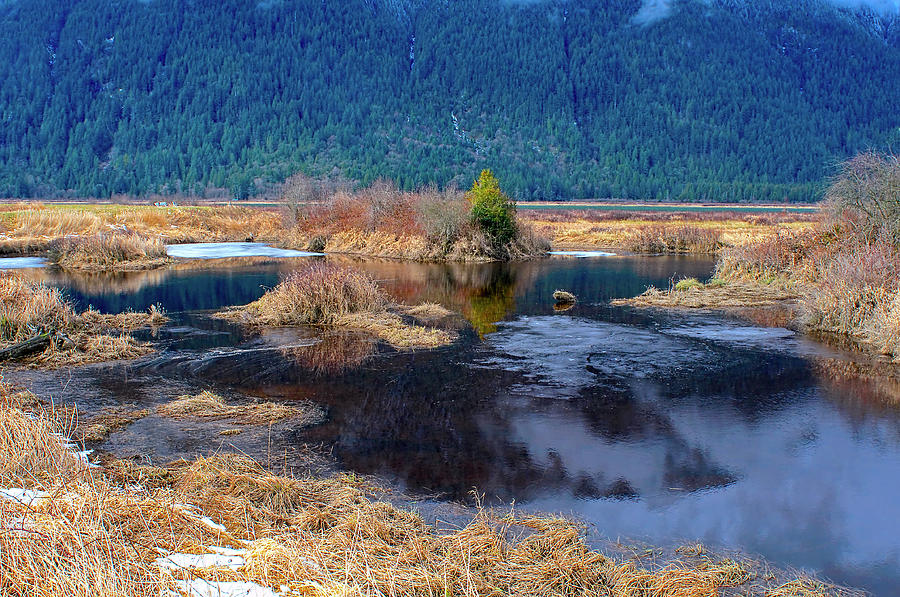 Pitt Polder Pond With Ice. by Sharon Talson