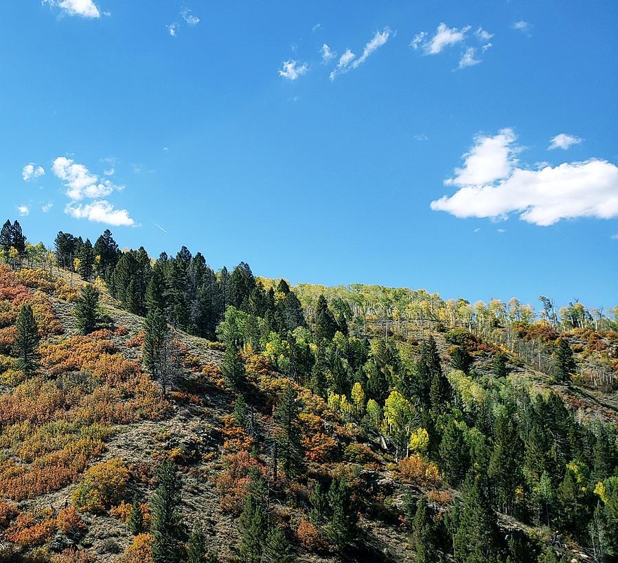 Mountainside Photograph - Plain Jane by Tonya Sisco