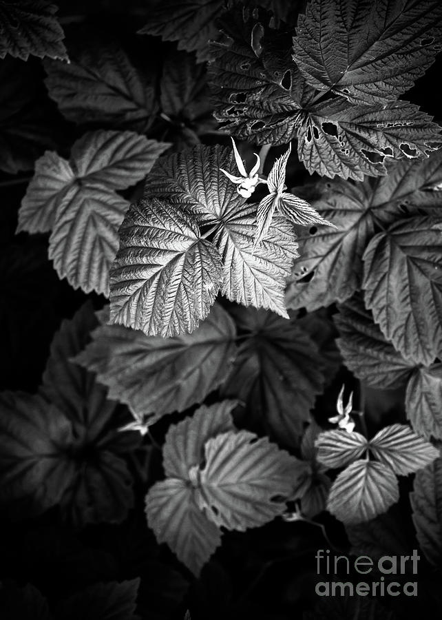Plant photo 2 black and white by Justyna Jaszke JBJart