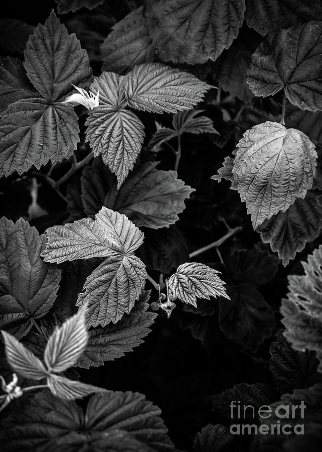 Plant photo 3 black and white by Justyna Jaszke JBJart