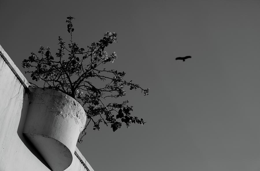 Plant Versus Flying Bird by Prakash Ghai