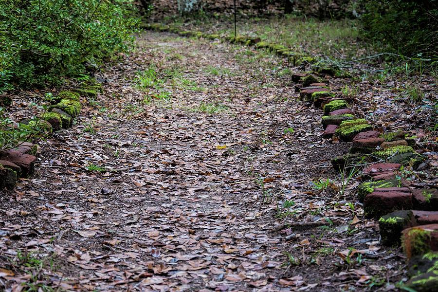 Plantation Pathway by Ed Waldrop