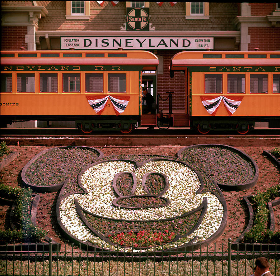 Planted Flowers Forming Design Of Mickey Photograph by Loomis Dean