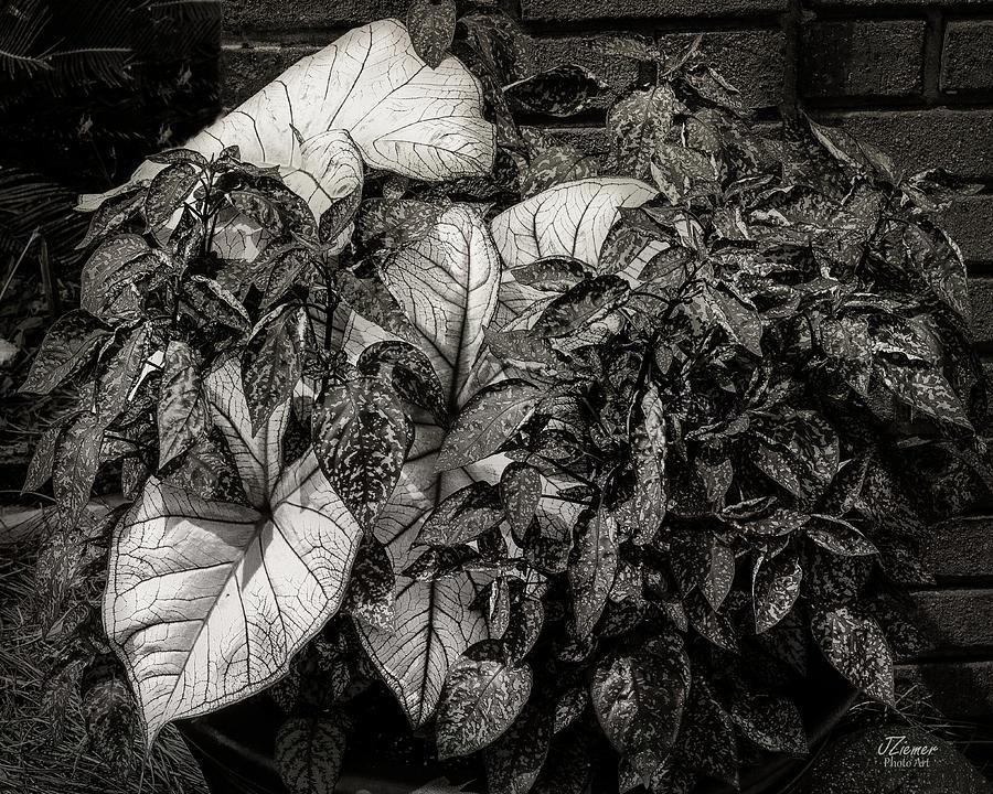 Flower Photograph - Planter by Jim Ziemer