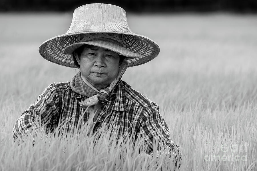 Planting Rice 080619 by Lee Craker