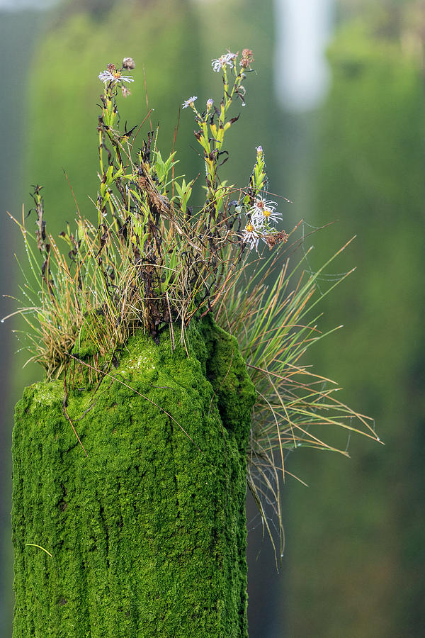 Plants on a Piling by Robert Potts