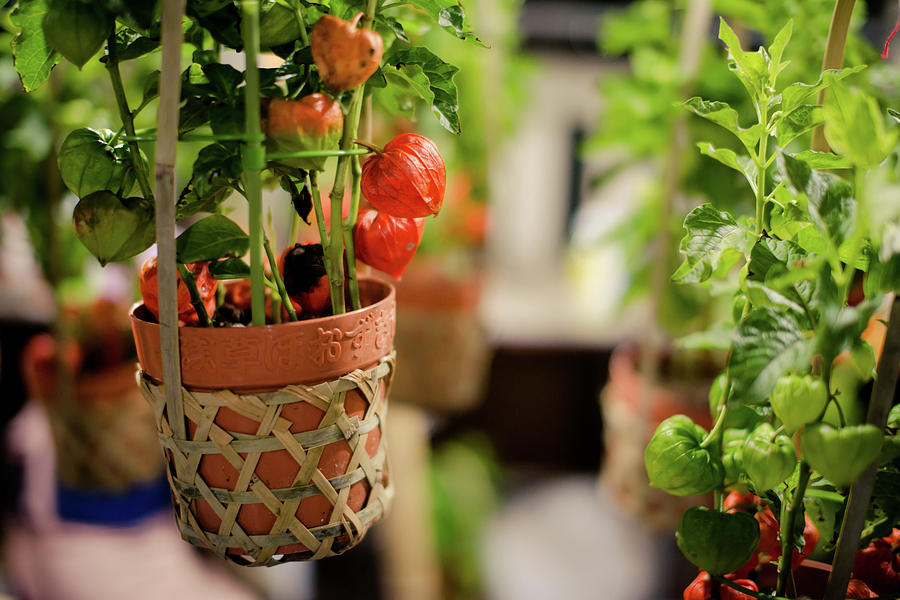 Plants Photograph by Takahiro Yamamoto