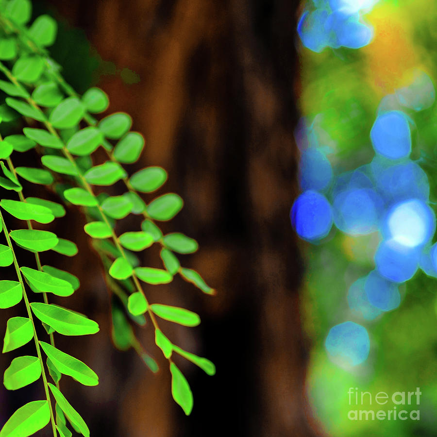 Plants Photograph - Plants, Trees And Flowers by D Davila