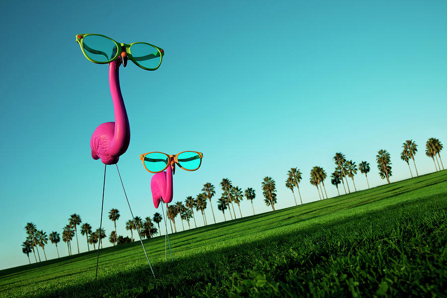 Plastic Pink Flamingos On A Green Lawn Photograph by Skodonnell