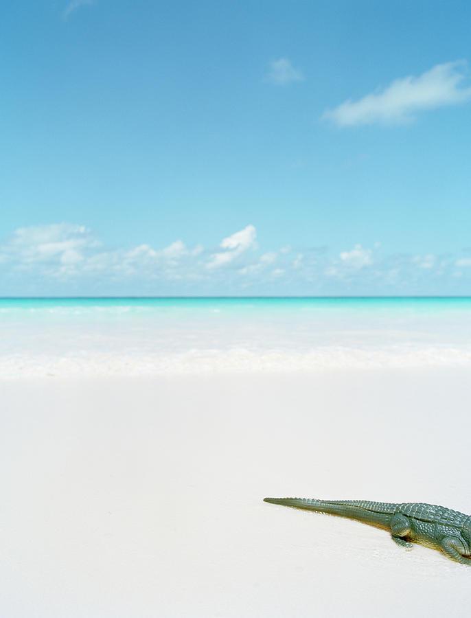 Plastic Tail Of Crocodile On Tropical Photograph by Nina Buesing