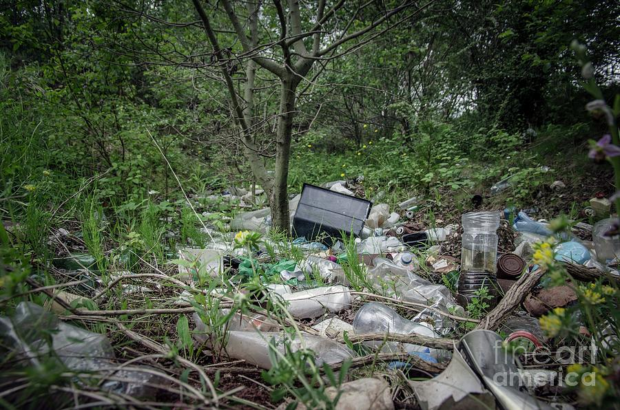 Abandoned Photograph - Plastic Waste Dumped In Urban Wood by Robert Brook/science Photo Library