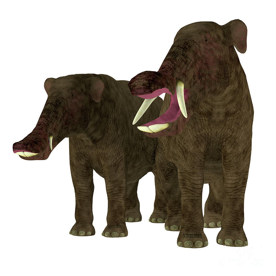 Platybelodon Male and Female by Corey Ford