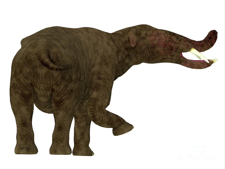Platybelodon Mammal Tail by Corey Ford