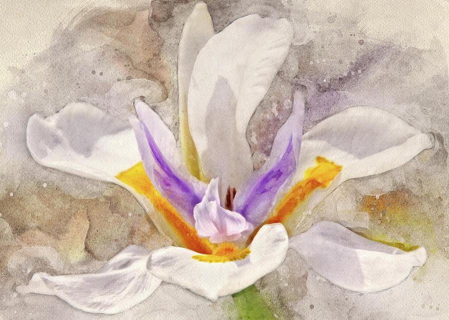 Playful Petals by Leda Robertson